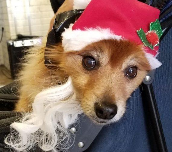 8 - Holiday Dog pg 2